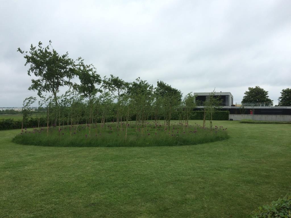 Græs, birk og forårsløg