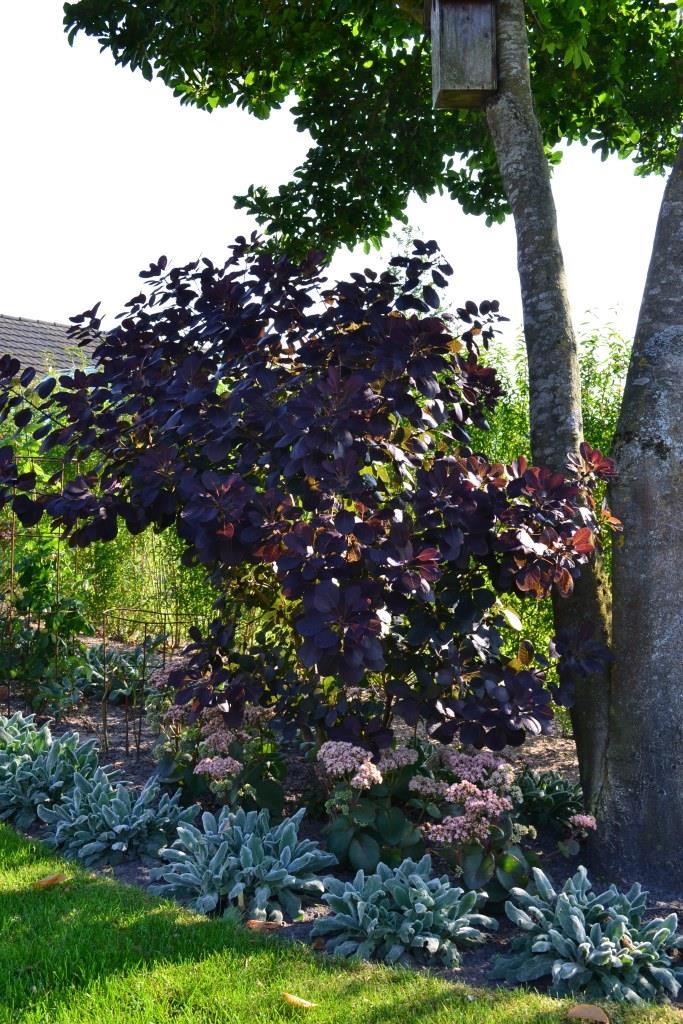 Farveharmoni i beplantningen