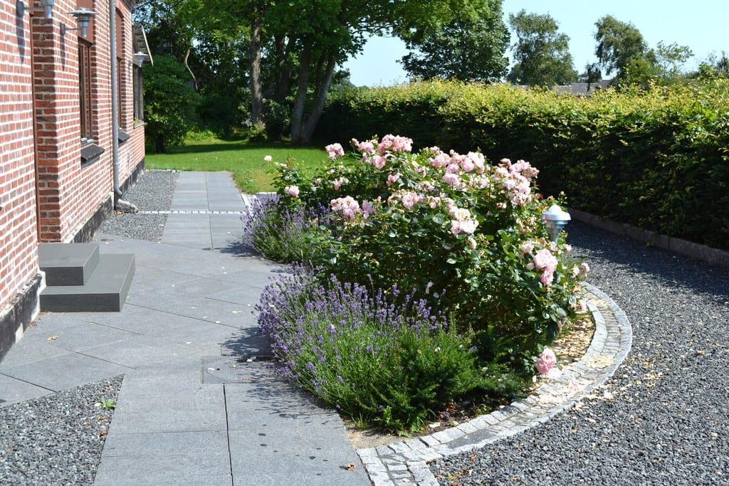 Lavendel og rosenbed i en halvcirkel