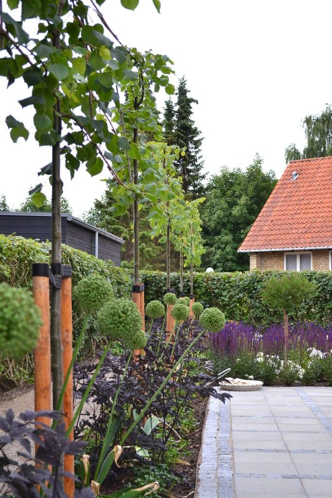 Træer med underbeplantning