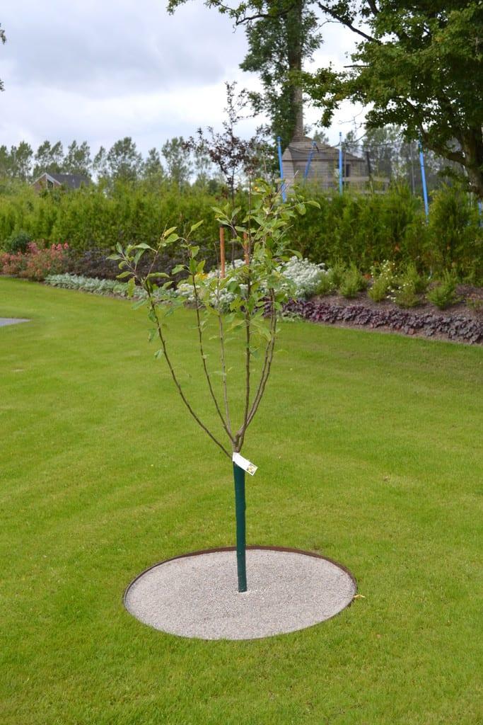 Stenmel og jernkant rundt om frugttræet