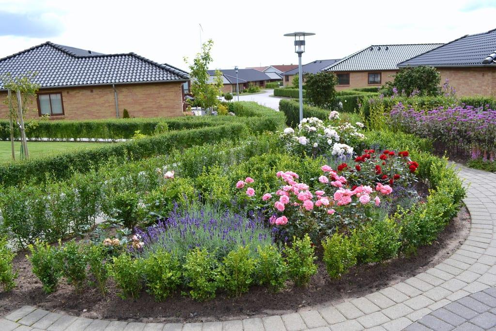 Halvcirkel med roser og lavendel