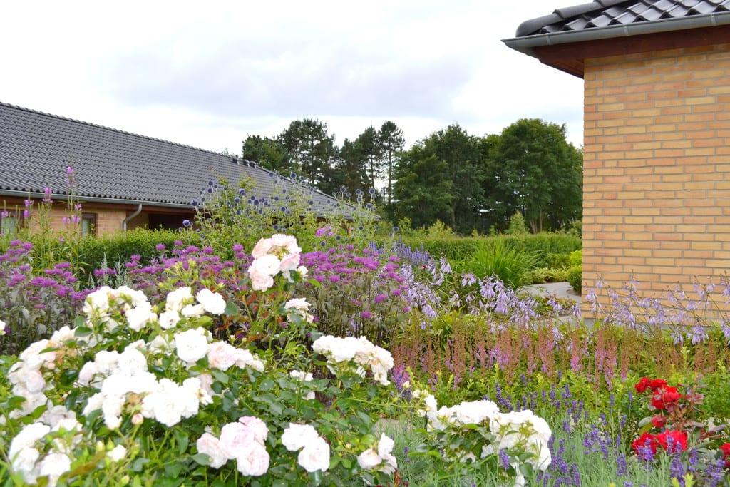 Blomstret have i Herning