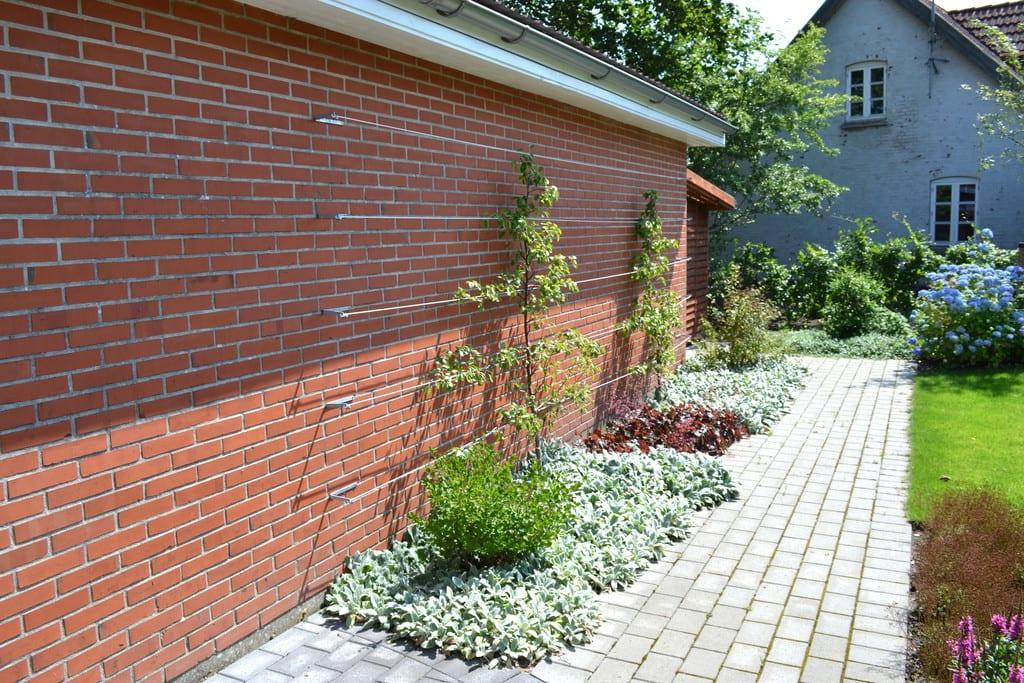Espalier til frugttræer og bunddækkende planter