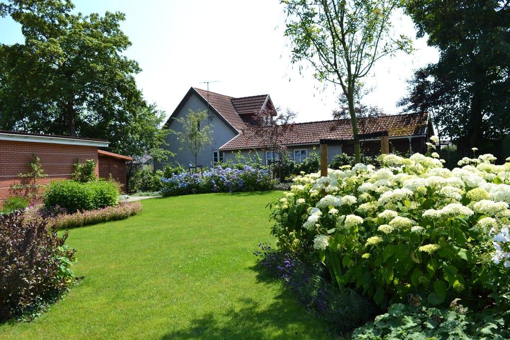 Græsplæne og hortensia