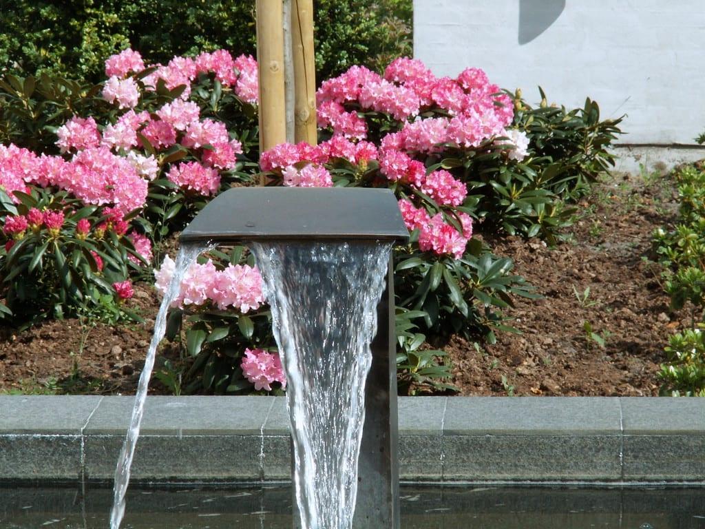 Rhododendron og springvand