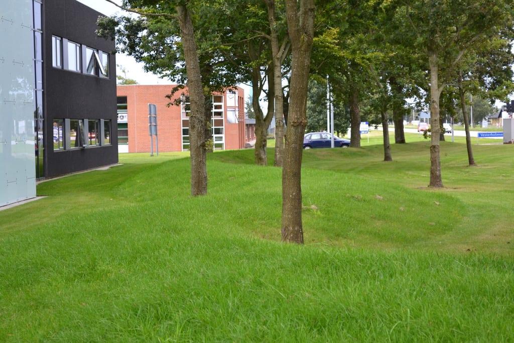En kuperet græsplæne