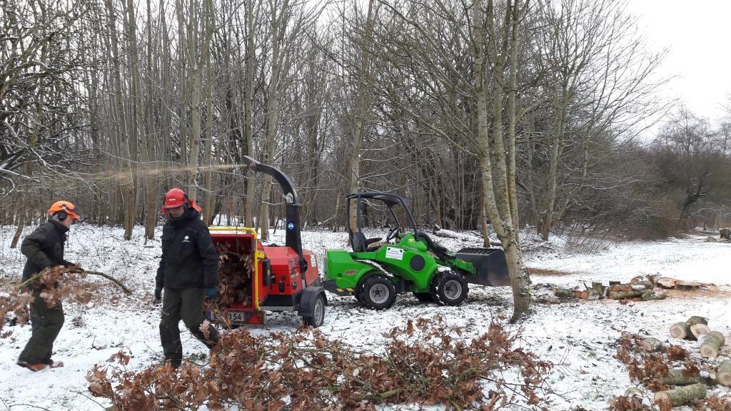 Fældning af træer og efterfylgende oprydning i Herning
