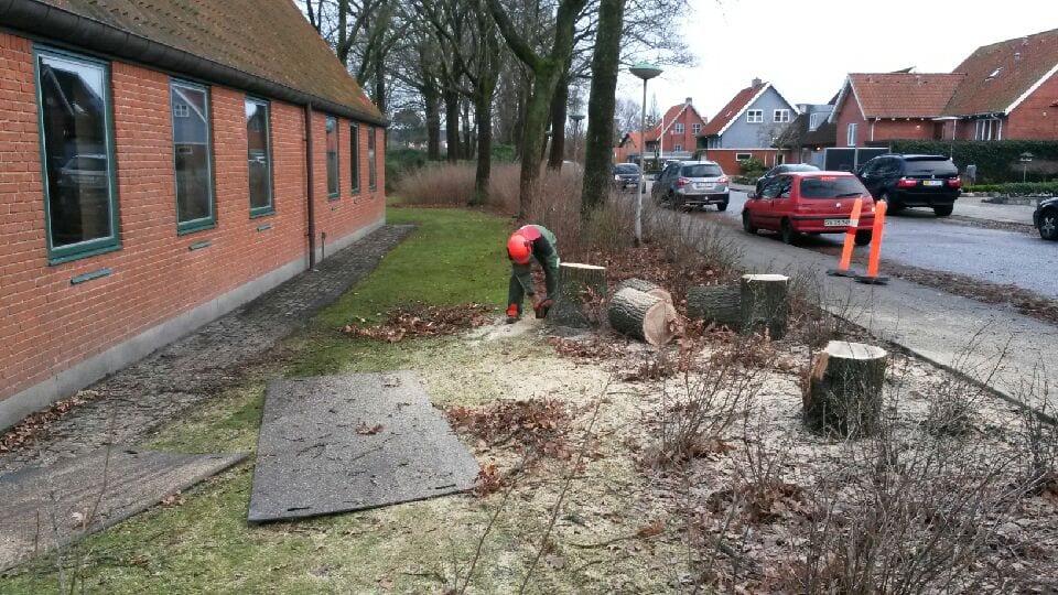 at fjerne træer med egen lift